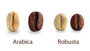 This image is showing the differences bwtween a Arabica and Robusta coffee bean